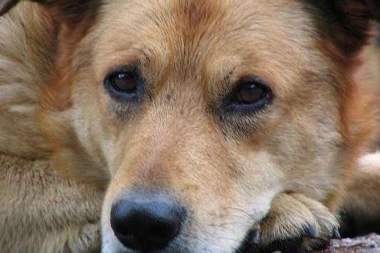 Бездомное собачье население Казани уменьшится на 1,3 тысячи