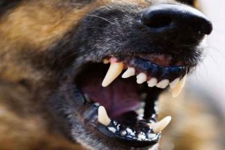«Они узнали вкус крови и уже не остановятся»: под Казанью стая псов растерзала телят на ферме, на очереди - люди?