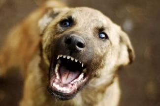 В Татарстане хозяин агрессивной собаки, разорвавшей лицо ребенку, останется безнаказанным?