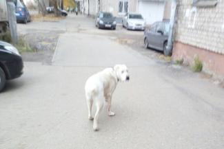 Полиция Казани ищет живодеров, которые казнили беременную собаку на детской площадке