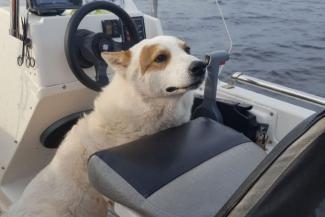Недостаточно жестоко: полиция в Татарстане не считает преступлением убийство безобидного пса