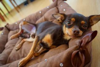 Казань прирастает собачьими отелями с VIP-номерами