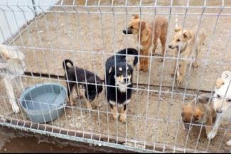 Уж они их ловили-ловили... Казанским чиновникам и депутатам показали собачью жизнь