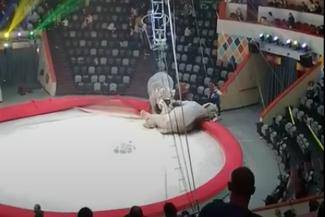 Впервые на арене: драка взбесившихся слоних в Казанском цирке удивила даже Запашного