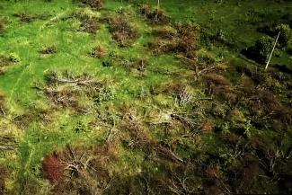«Как будто родину украли!»: жители села Ключищи под Казанью, где вырубили знаменитый яблоневый сад, требуют вернуть землю, проданную под коттеджи