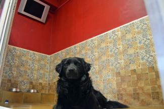 Теплый пол, телевизор и релакс-дог: в казанской VIP-гостинице для животных собакам хорошо, но дома лучше