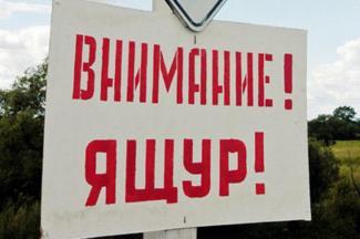 Ящур подобрался к Татарстану