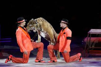 Казанцев ждут Запашные со львами и «Агата Кристи»