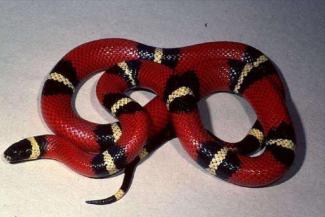 В казанскую квартиру заползла красная змея