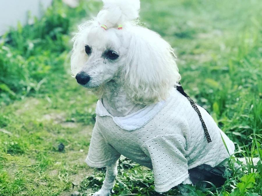 Собака бывает кусачей, или Чем закончилась история с нападением алабая на девушку в Гродно?