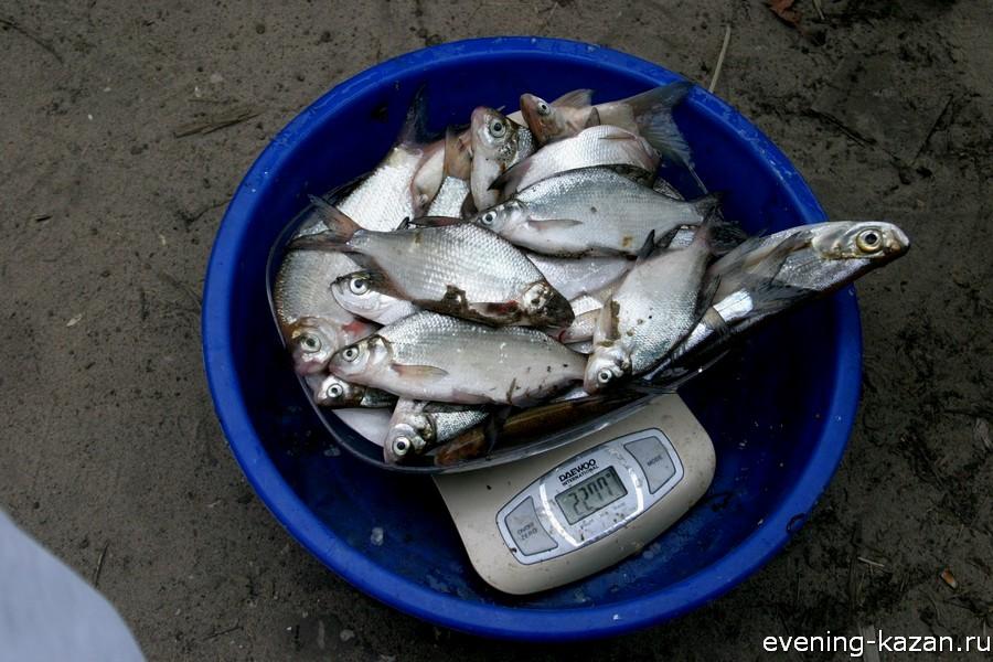 рыбный клев в казани