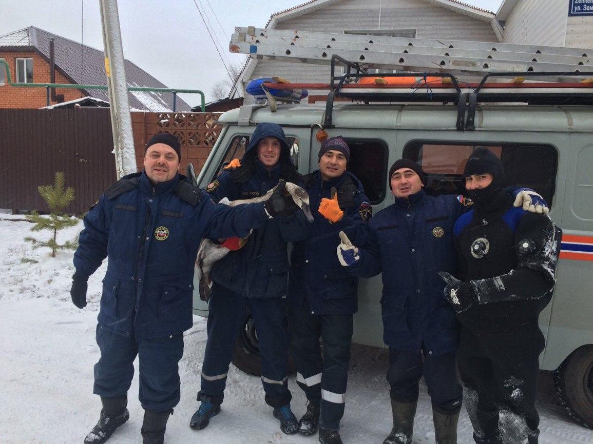 ВКазани cотрудники экстренных служб освободили изледового плена 3-х диких лебедей