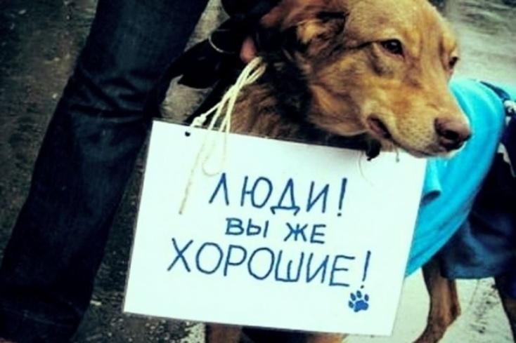 Зоозащитники внесли всех живодеров РФ вединую базу