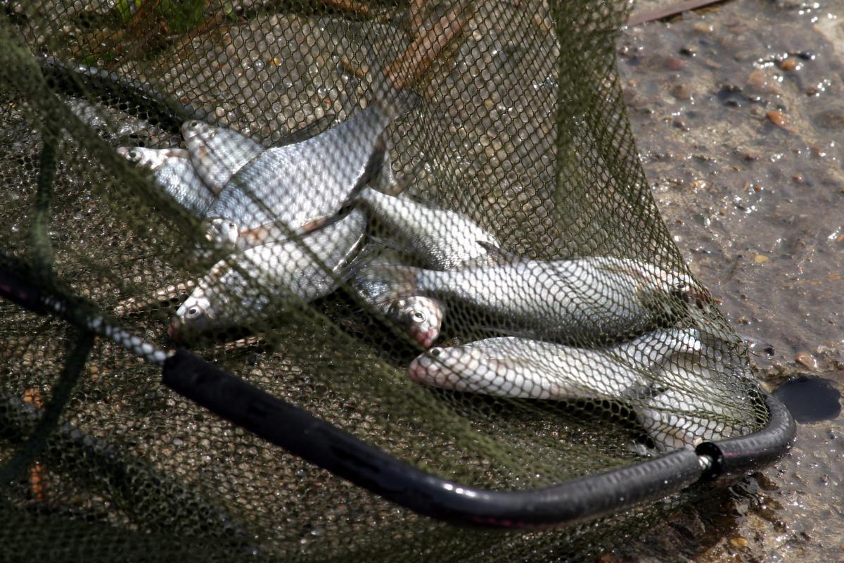 на рыбалку с электрошокером