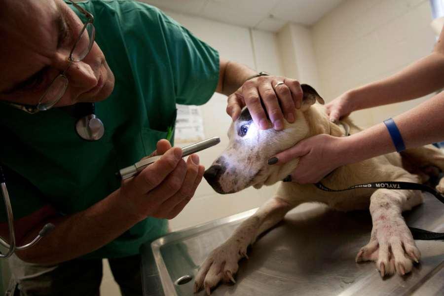 результате моменту лептоспироз у собаки как поставить диагноз что там, где